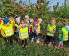 Słoneczka i Motylki – wycieczka do sadu