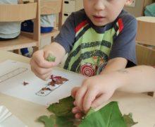 Jesienne odkrywanie liter i cyfr motylki