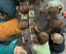 przedszkole-klodawa-grupa-sowki-dzien-drzewa-2